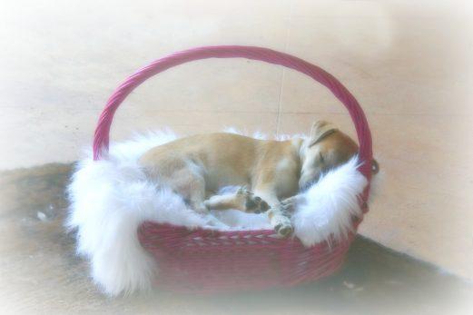No Sew Princess Puppy Bed