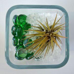 019-Air-Plant-Terrariums