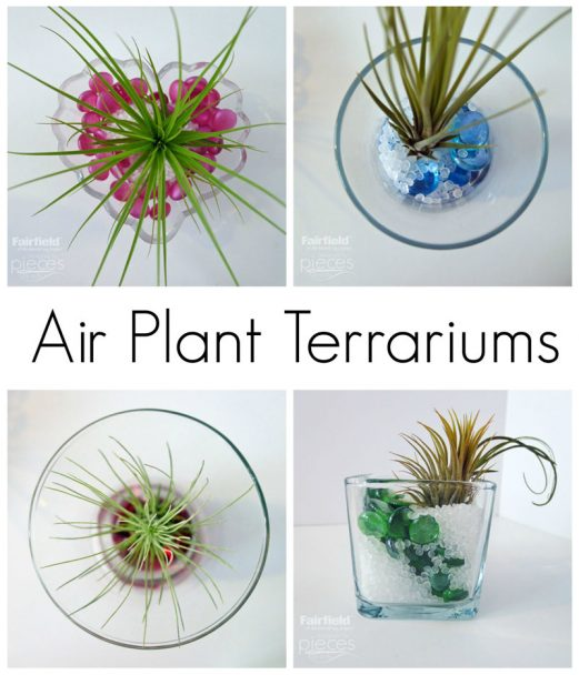 Air Plant Terrariums with Poly-Pellets®