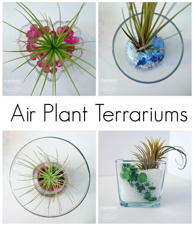 Air Plant Terrariums