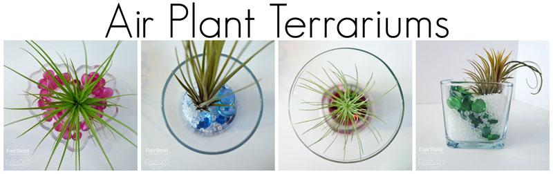 Air-Plants-Skinny