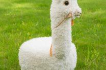 Caya The Alpaca Tuffet