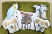Pet Pillow DIY:  Sewing with Kids